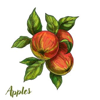 Trois pommes sur une branche avec des feuilles