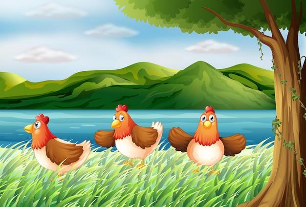 Les trois poules au bord de la rivière