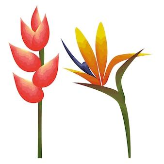 Tropical et exotiques heliconias