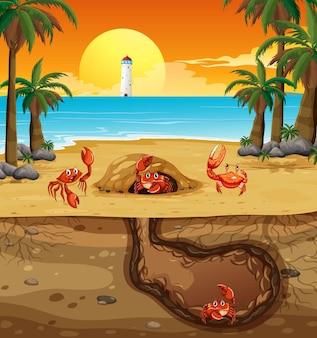 Trou animal souterrain avec de nombreux crabes