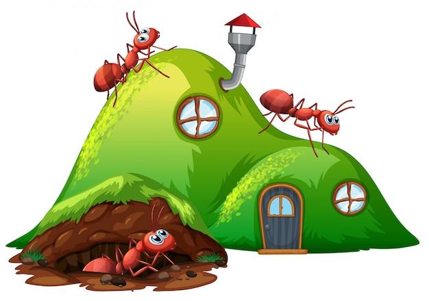 Trou souterrain fourmi