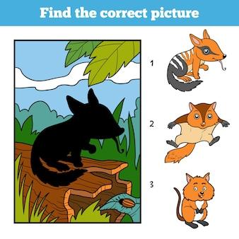 Trouvez la bonne image, jeu éducatif pour les enfants. numbat et fond