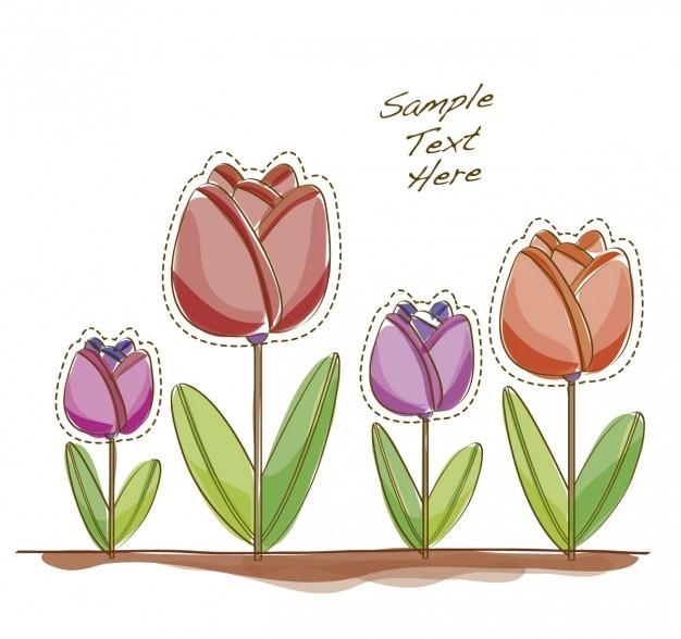Tulip fond du champ