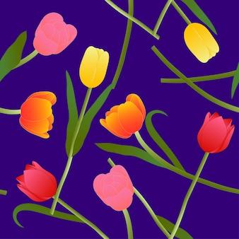 Tulipe colorée sur fond violet bleu