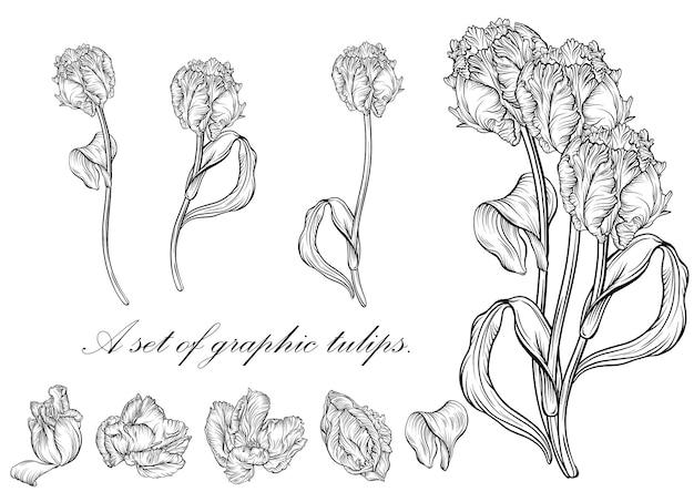 Tulipe de contour. fleurs dessinées à la main d'art en ligne. vecteur de tulipes. illustration florale