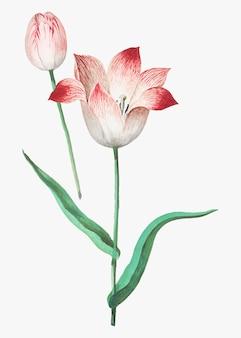 Tulipe dans le style vintage