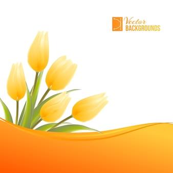 Tulipe en fleurs sur fond blanc.