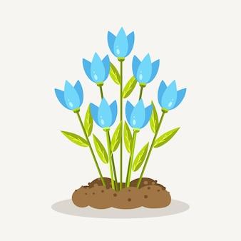 Tulipes bleues avec tas de terre, sol. jardinage, plantation de fleurs. le printemps