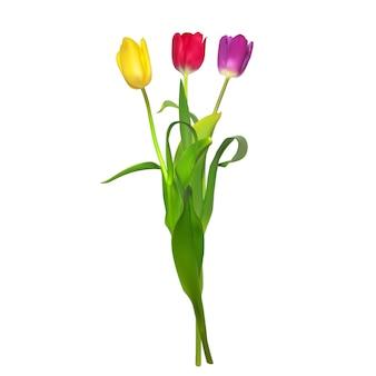 Tulipes isolées