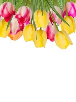 Tulipes jaunes, roses fraîches sur blanc.