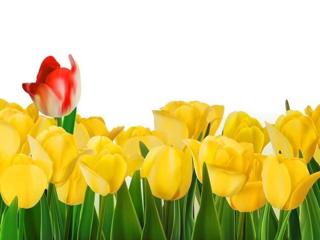 Tulipes jaunes et une rouge.