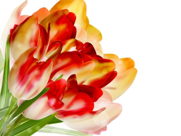 Tulipes rouges et fond de bokeh.