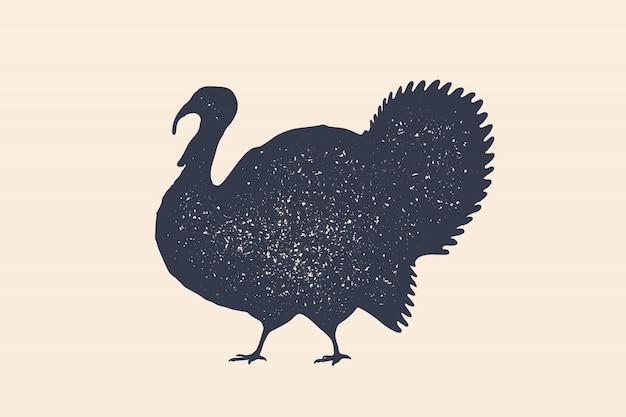 Turquie, oiseau. concept d'animaux de ferme