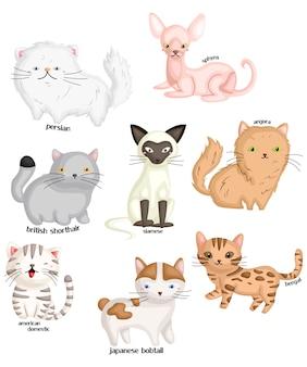 Types de chat