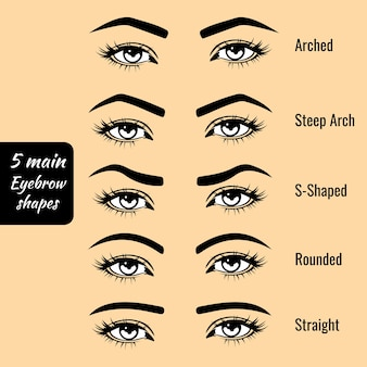 Types de forme de sourcil de base vector illustration