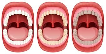 Un ensemble d'anatomie de la bouche humaine