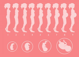 Un vecteur de progression enceinte