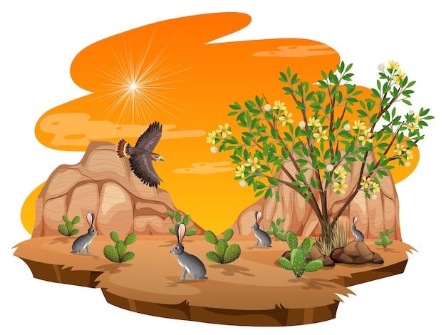Usine de créosote bush dans le désert sauvage sur fond blanc