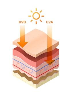 Uvb uva les rayons du soleil pénètrent dans l'épiderme de la peau coupe transversale de la peau humaine couches structure soins de la peau concept médical plat