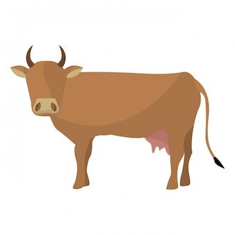 Vache brune indienne