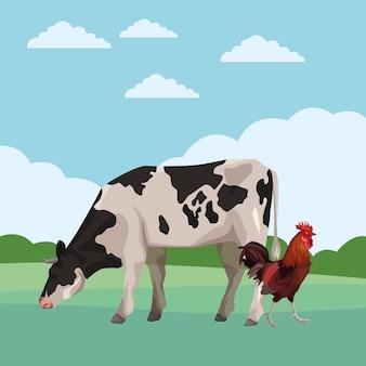 Vache et coq