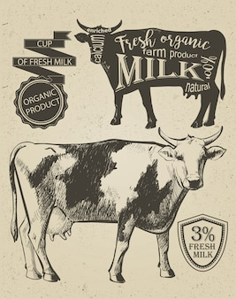 Vache dans un style vintage graphique, image de dessin vectoriel de main.