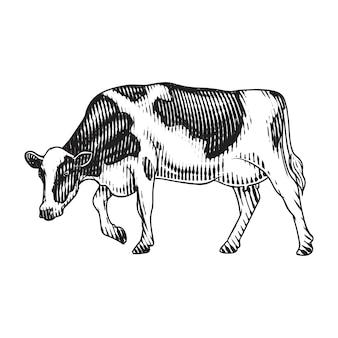 Vache laitière vache gravée dessin à la main