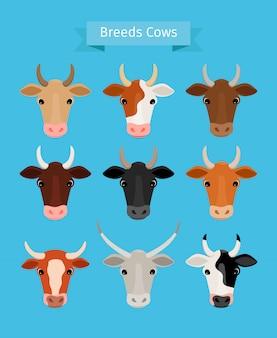 Vache têtes vecteur ensemble