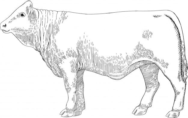 Vache à viande dans le style graphique vintage de gravure