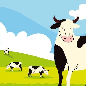 Vaches de ferme dans le domaine
