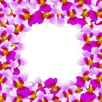 Vanda mauve joaquim orchid border2