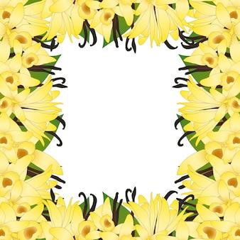 Vanilla planifolia fleur et gousses de vanille ou de haricots