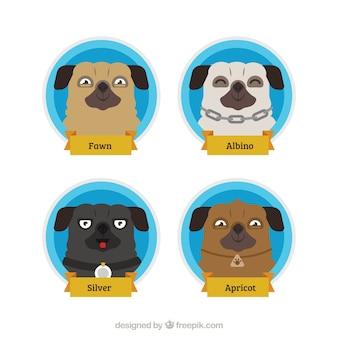 Variété amusante de smiley pug faces