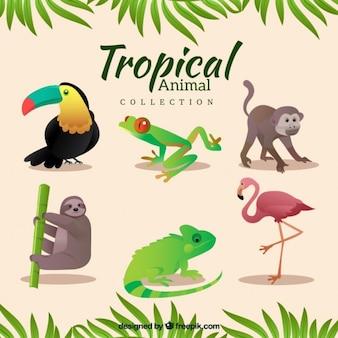 Variété d'animaux tropicaux