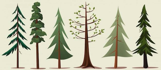 Variété d'arbres forestiers