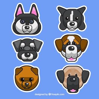 Variété de chiens plats