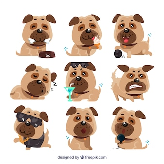 Variété originale de pugs drôles