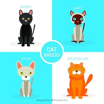 Variété de pack de chat