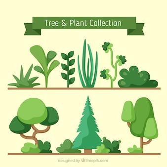 Variété de plantes et d'arbres