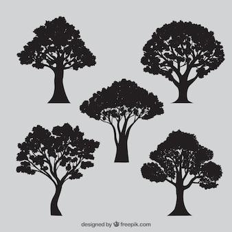 Variété de silhouettes d'arbres
