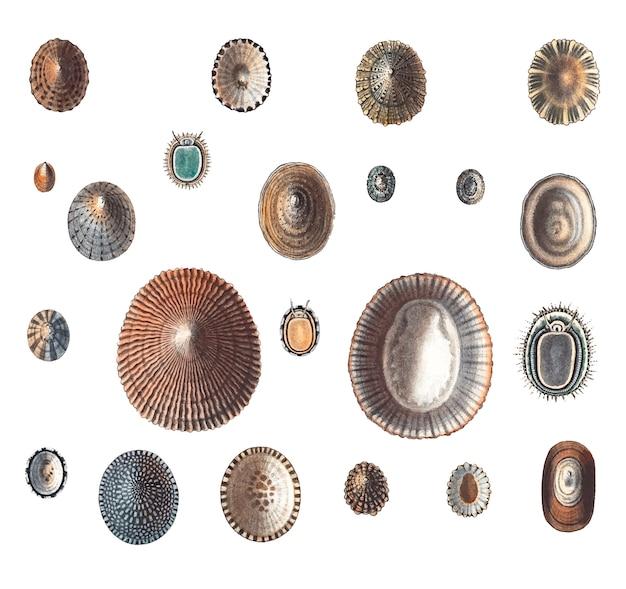 Variétés d'escargots de mer