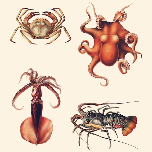 Variétés de fruits de mer