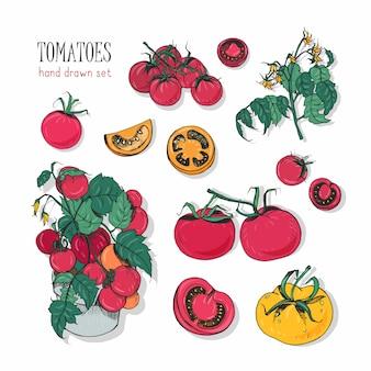 Variétés de tomates, ensemble dessiné à la main. branche, fleurs, buisson, partie coupée. illustration colorée avec des tomates cerises, des couleurs rouges, orange, jaunes.