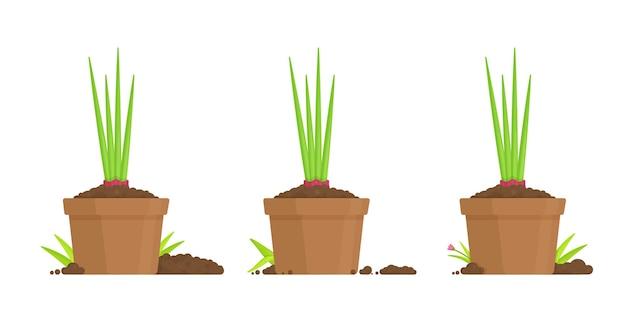 Vase avec des semis dans un vase.