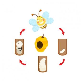 Vecteur d'abeille cycle de vie illustration