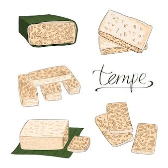 Vecteur alimentaire tempeh ou tempe