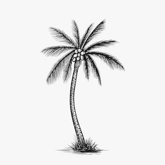 Vecteur d'arbre de noix de coco dessiné à la main