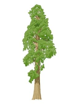 Vecteur de l'arbre sequoia