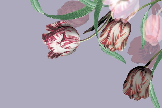 Vecteur de bordure de tulipe sur fond violet
