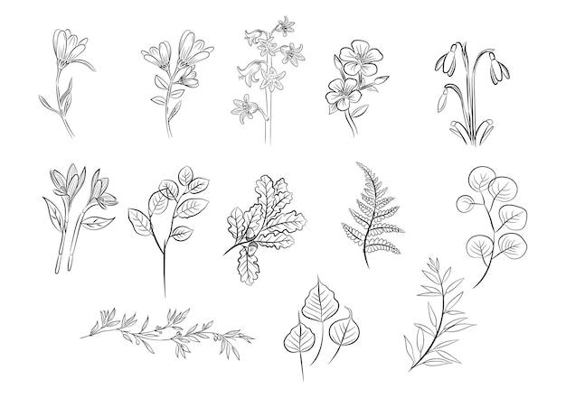 Vecteur de collection de contours floraux